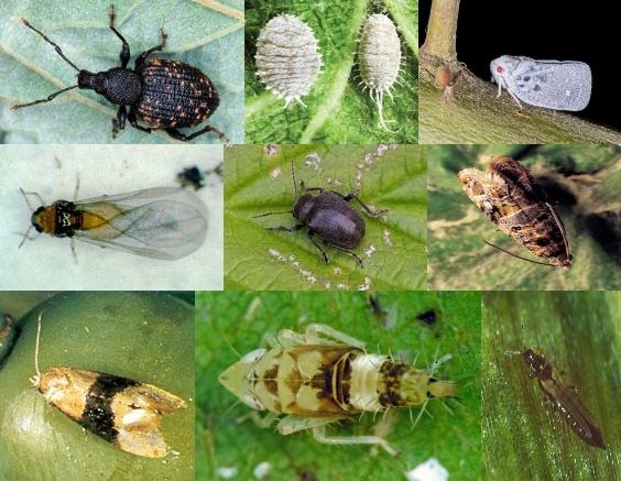 Insecten mozaiek